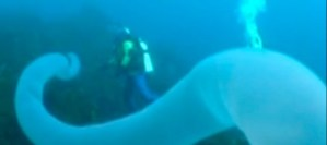 Bizarre creature shaped like giant pipe is recorded on video