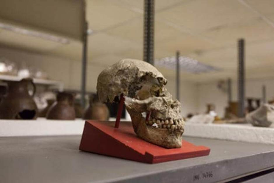 An elongated skull from Father Crespi's collection. (Ancient-Origins.net)