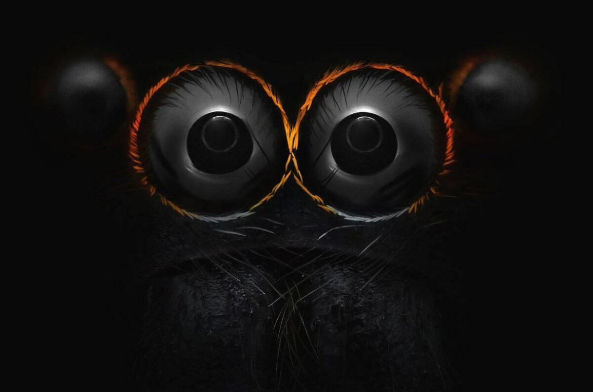Eyes of a jumping spider