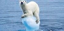 Avaaz polarbear_1_460x230