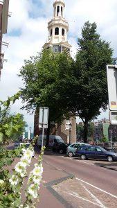 Hollyhock (Amsterdam)
