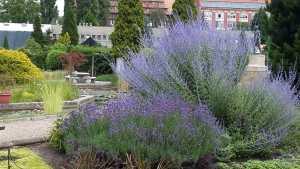 Botanical gardens (Wroclaw)