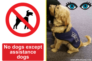 Open Your Eyes To Assistance Dogs