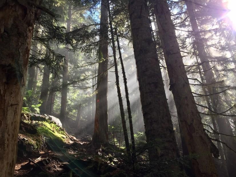 whistler forest