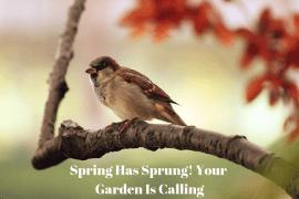 Spring Has Sprung! Your Garden Is Calling