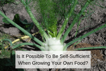 Is It Possible To Be Self-Sufficient When Growing Your Own Food?