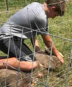 Farm Life, livestock sale