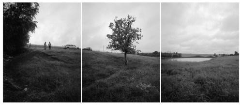 Dwarf chinkapin oak_KS_Bosworth