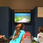 turtle exhibit