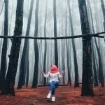 Spot terbaik di Pinus Mangunan