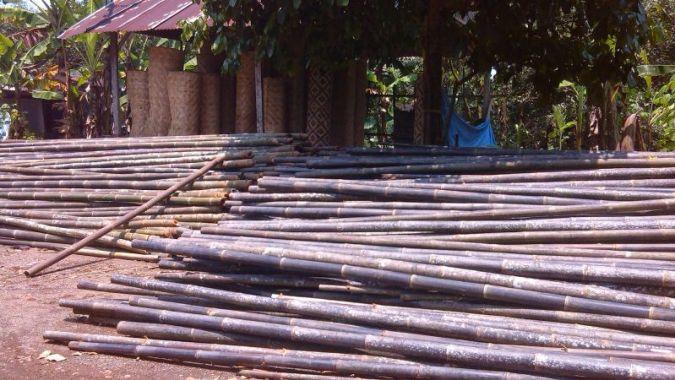 jenis jenis bambu