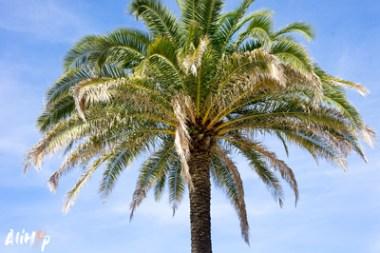 alihop-gr-paris-nature-palmier