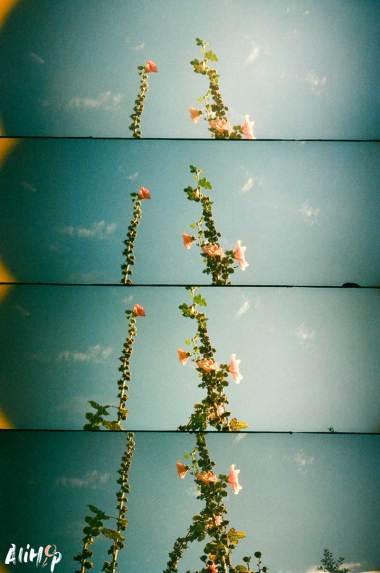 fleur-ciel-supersampler-lomography-alihop
