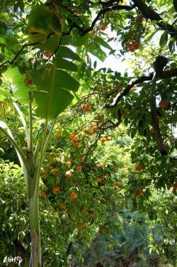 alihop-palerme-sicile-weekend-oranges