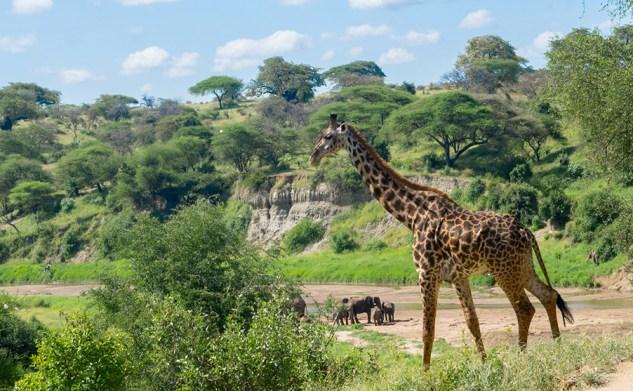 Tanzanie #3 : Un weekend safari : détente et découverte au coeur des parcs