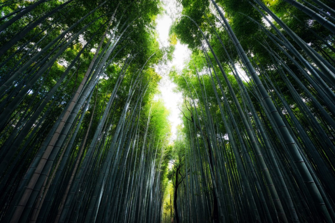 AlikGriffin_Japan_Kyoto_Bambo_Forest-H