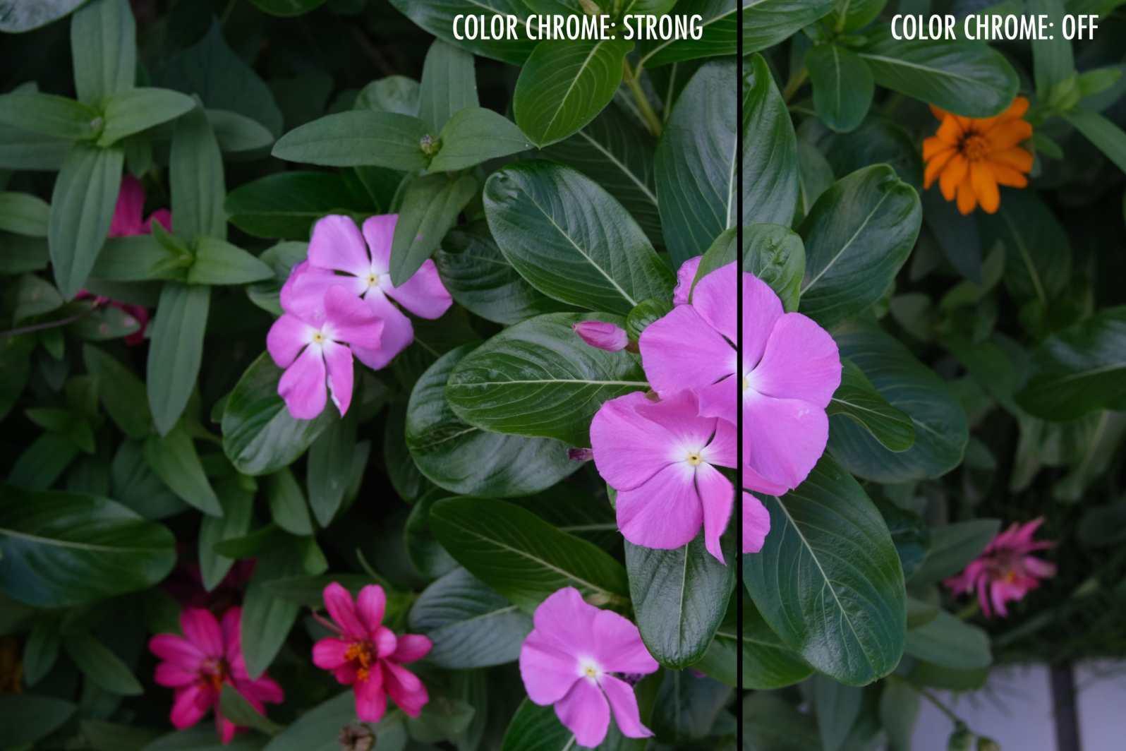 Fujifilm_XT3_ColorChrome-L