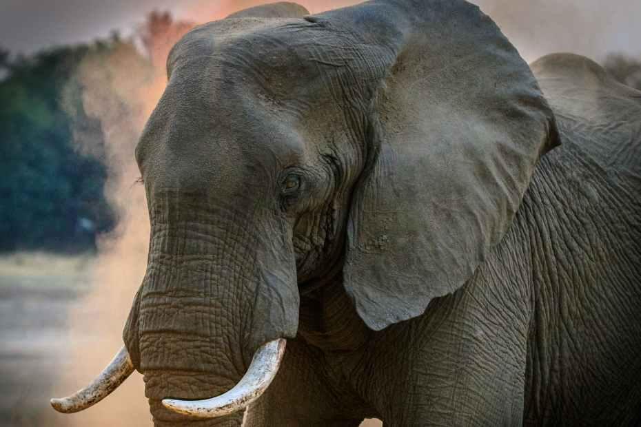الفيل في الحلم تفسير الرؤيا او في المنام