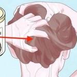 Si pones esto en tu cabello eliminarás su caída para siempre y evitarás las canas… Mira cómo hacerlo!