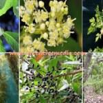 6 PLANTAS DE GRAN ALCANCE QUE DESTRUYEN EL CÁNCER PROBABLEMENTE NUNCA HAS OÍDO HABLAR DE ELLAS