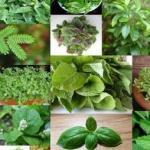 15 Plantas Y Hierbas Para Purificar Los Pulmones Y Mejorar La Respiración…