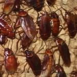 Cómo eliminar las cucarachas de tu casa para siempre