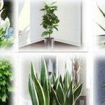 Estas plantas son bombas de oxígeno. Debes Tener por lo menos una de ellas para limpiar el aire de casa