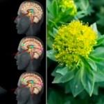 La ansiedad te hace gordo, enfermo y deprimido, aquí hay 10 hierbas que funcionan mejor que los medicamentos