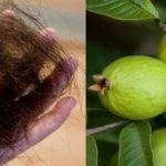 ¡INCREÍBLE, Las hojas de esta planta pueden detener la caída del cabello en un 100%!