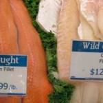 """¿Por qué tu salmón """"salvaje"""" puede ser realmente salmón cultivado de China?"""