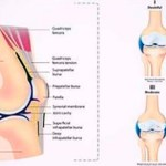 5 simples ejercicios que puedes hacer para que tus rodillas sean más fuertes