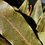 Quema algunas hojas secas de la laurel en tu hogar y siéntete positivo inmediatamente, he aquí cómo