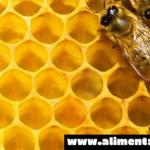 100.000 apicultores alemanes llamaron a prohibir los OGM