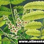 5 remedios con hierbas para la espondilitis anquilosante
