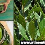 Descubre las propiedades antirreumática de las hojas de laurel