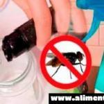 Esto puede eliminar todas las cucarachas y mosquitos de tu casa
