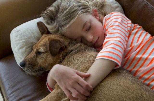 Perros para los niños