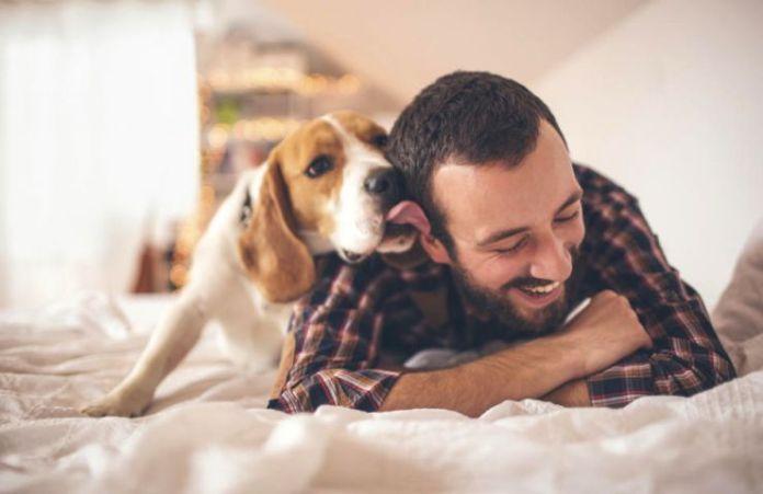Beneficios de tener perros en casa