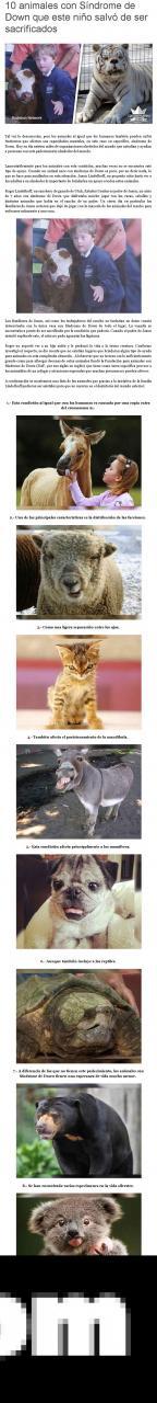 10 animales con síndrome de down que este niño salvó de ser sacrificados..