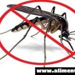 Lociones efectivas y naturales para combatir la picadura de mosquitos e insectos.