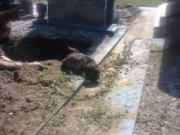 la-pastor-del-cementerio-5