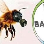 Bayer descubre accidentalmente un estudio que muestra que su plaguicida está matando a abejas, niega rápidamente conclusiones