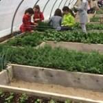 Comparte si piensa que cada escuela debe tener un programa de jardinería durante todo el año!