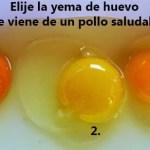 ¿Qué huevo crees que vino de un pollo saludable?