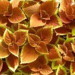 Remedios caseros para el colon irritable