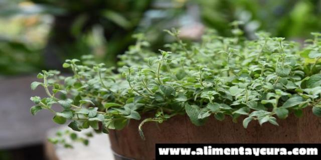 Te gustaría tener tus propias plantas medicinales en tu casa.