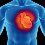 Remedios caseros para fortalecer el corazón y los vasos sanguíneos