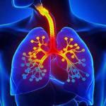 Algunas plantas y hierbas que curan infecciones respiratorias