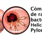 Cómo eliminar de raíz la bacteria Helicobacter pylori naturalmente