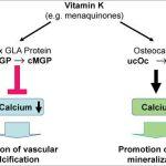 Vitamina K2: Un elemento esencial para la salud ósea y cardiaca